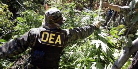 dea-marijuana-1024x512